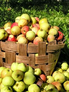 apples22